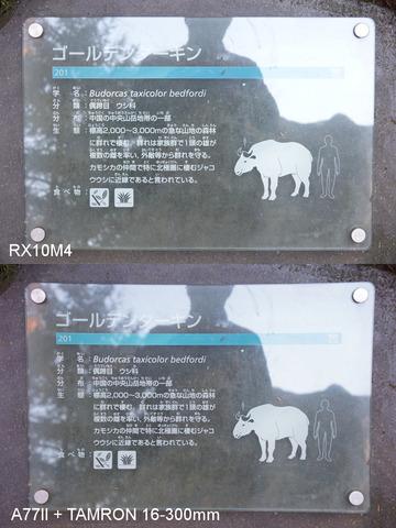 rx10m4-006