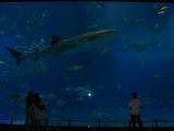 チュら海水族館