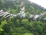 笠形山鯉のびり