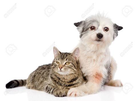 25798317-白い背景で隔離の犬猫受け入れ