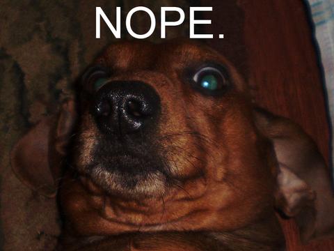 scared-wiener-dog-nope