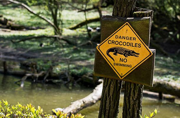 crocodile-warning