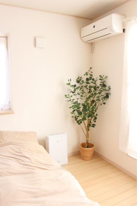 ニトリ フィカス150㎝ 寝室