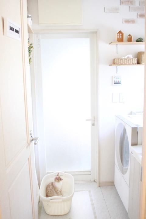 洗濯機好き 猫 シェリル ノルウェージャンフォレストキャット