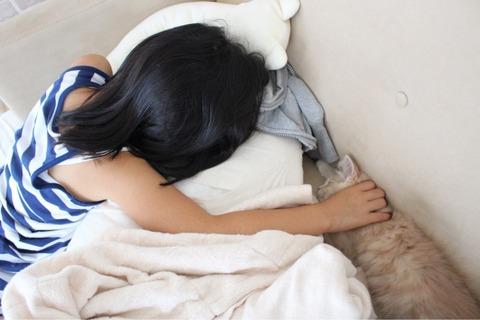 昼寝 猫 娘 シェリル