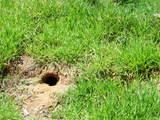 穴フクロウの巣