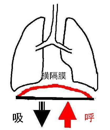 呼吸 横隔膜