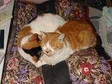 ミミちゃんもシロちゃんも寝ています。