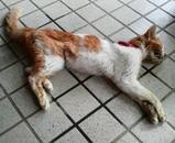 ミミちゃんの体は、固くなってしまいました(PM3:15)