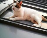 シロちゃんは屋根の上。