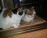 シロちゃん(左)とミミちゃん(右)が待っていました。