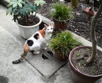 外で猫用の草を食べています。