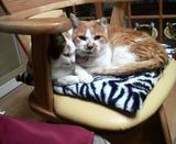 ミミちゃんとシロちゃんはくっついて。