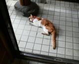 ミミちゃんは玄関先で衰弱しています。(AM11:10)