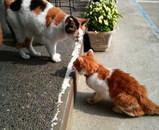 ミミちゃんとシロちゃんはお店の前で遊んでいます。