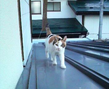 屋根の上で楽しく遊んでいます。
