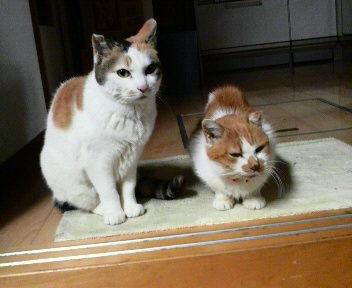 シロちゃんとミミちゃん