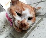 ミミちゃんの最後の死に顔でした。(PM3:15)