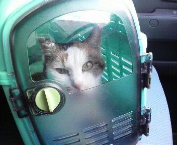H.24.06.22 シロちゃんは動物病院へ行って来ました。