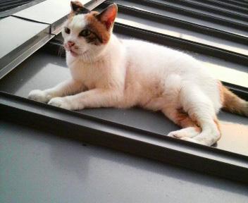 屋根の上は、気持ちいいなぁ!