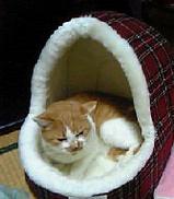 ミミのLベッド