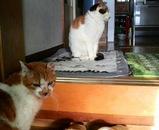 左がミミちゃん、右がシロちゃん、2匹して遊んでいます。