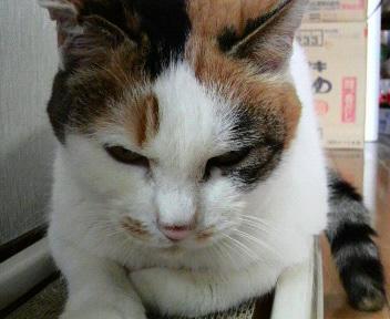シロちゃんを近くから撮りました。