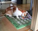ミミちゃんは大好きな紅鮭を1匹食べました。