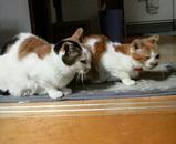 ミミちゃんとシロちゃんは2匹並んで待っていました。