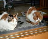 左がシロちゃん、右がミミちゃん。皆仲良しです。