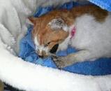 ミミちゃんをペットハウスの中で寝かせました。(AM9:30)