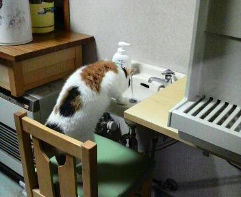 水飲みの姿が可愛いのよね。