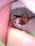 シロの寝床