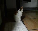 シロちゃんはミミちゃんの帰りをじっと待っていました。
