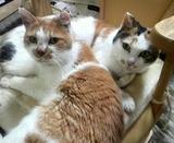 ミミちゃんとシロちゃん、仲良し。