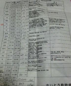 H.24.4.11 シロちゃんの血液検査の結果