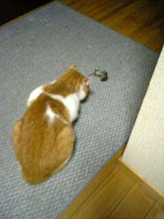 ミミちゃんがネズミを捕まえた