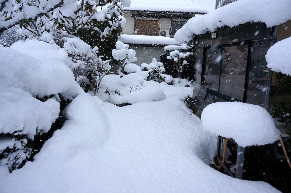 家の庭だす