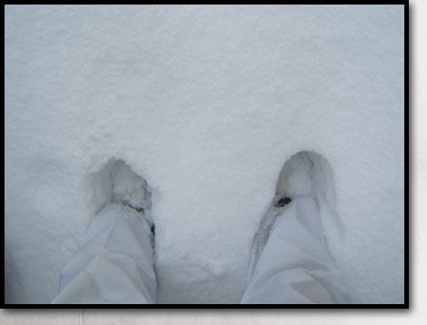 雪が積もっています