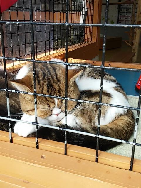 20160125_30猫