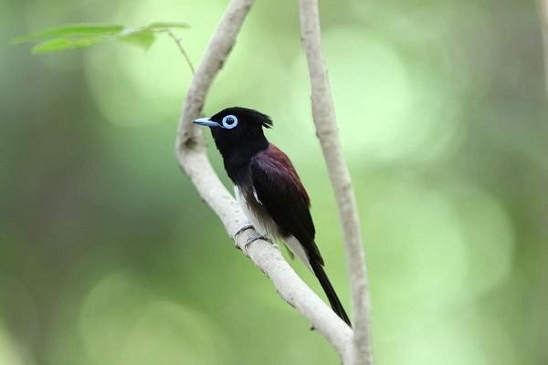 【画像】ジュビロ新ユニの鳥の主張が強過ぎると話題にwww