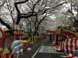 熊谷桜堤2