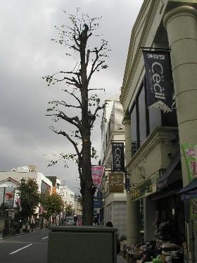 街路樹1S 004