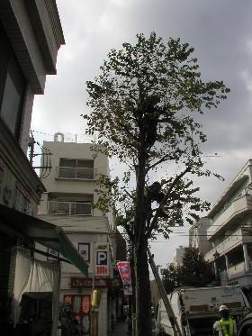 街路樹4S 003