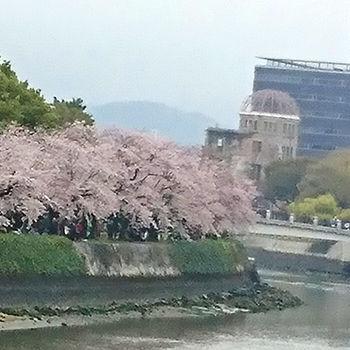 原爆ドームと桜2017
