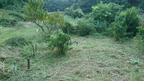 草刈り後①