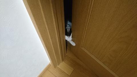 ドアを開けるモモちゃん