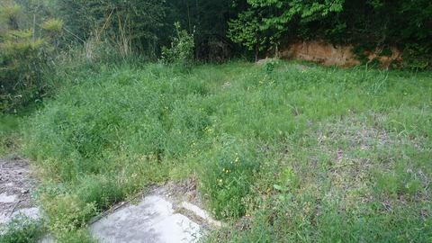 草刈り前の庭2