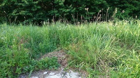 雑草だらけの空き地①