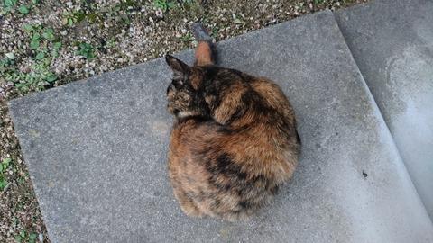 丸まるサビ猫